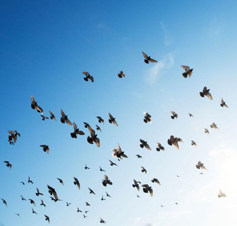 Vögel im Himmel